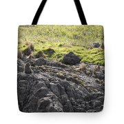 Seal - Montague Island - Austrlalia Tote Bag