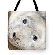 Seal Pup Tote Bag