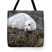 Seal Resting In Dunvegan Loch Tote Bag