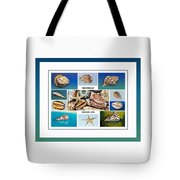 Seashell Collection 4 - Collage Tote Bag