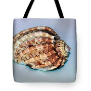 Seashell Wall Art 9 - Harpa Ventricosa Tote Bag