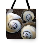 Seashells Spectacular No 23 Tote Bag