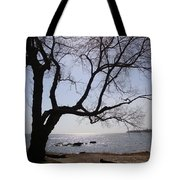 Seaside Tree In Connecticut Long Island Sound Tote Bag