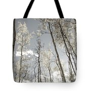 Silver Birch  Tote Bag