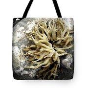 Seaweed Rock Tote Bag