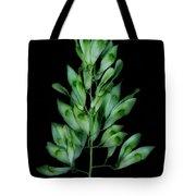 Seed Tree Tote Bag
