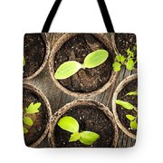Seedlings Growing In Peat Moss Pots Tote Bag