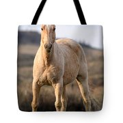 Seeing Eye-to-eye Tote Bag