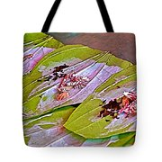 Selling Betel Nut For Chewing In Tachilek-burma Tote Bag