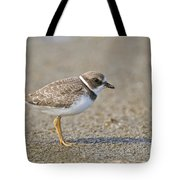 Semi-palmated Plover Pictures 34 Tote Bag