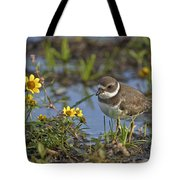 Semi-palmated Plover Pictures 44 Tote Bag