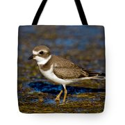 Semipalmated Plover Tote Bag