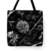 Sensitive Briar Schrankia Nuttalii  Tote Bag