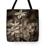Sepia Dreams Tote Bag