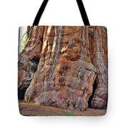 Sequoia Tree Base Tote Bag