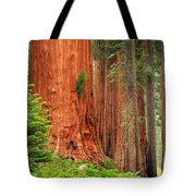 Sequoias Tote Bag by Inge Johnsson