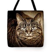 Serious Tabby Cat Tote Bag