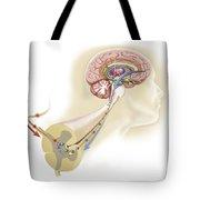 Serotonin Released In The Brain Travels Tote Bag