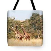 Seven Masai Giraffes Tote Bag