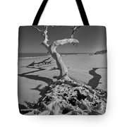 Shadows At Driftwood Beach Tote Bag