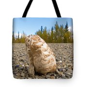 Shaggy Mane Mushroom Grows Through Gravel Surface Tote Bag