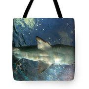 Shark Above Tote Bag