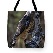 Sharp-shinned Hawk Tote Bag