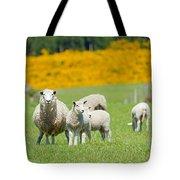 Sheep Grazing Tote Bag