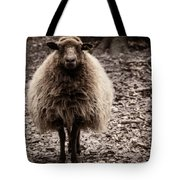 Sheep Stare Tote Bag