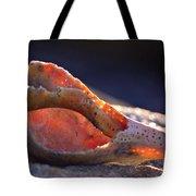 Shellwork Tote Bag