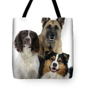 Shepherds With English Springer Spaniel Tote Bag