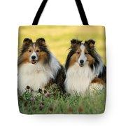 Shetland Sheepdogs Tote Bag