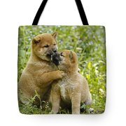 Shiba Inu Puppies Tote Bag