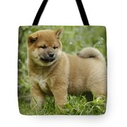 Shiba Inu Puppy Dog Tote Bag