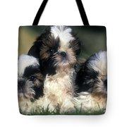 Shih Tzu Puppy Dogs Tote Bag