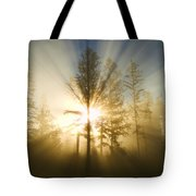 Shining Through Tote Bag by Peggy Collins