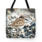 Shorebird Beauty Tote Bag