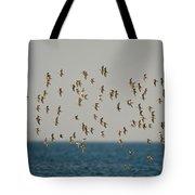 Shorebirds Flying Tote Bag