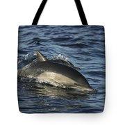 Short-beaked Common Dolphin Sea Tote Bag