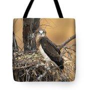 Short-toed Snake Eagle Circaetus Gallicus Tote Bag