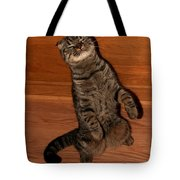 Shorthair Scottish Fold Cat Tote Bag