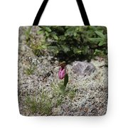 Showy Lady's Slipper 3 Tote Bag