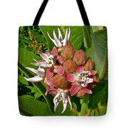 Showy Milkweed Along Hog Canyon Trail On Tour Of The Tilted Rocks In Dinosaur National Monument-utah Tote Bag
