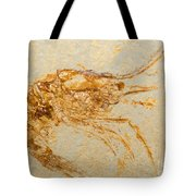Shrimp Fossil Tote Bag