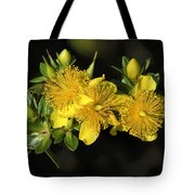 Shrubby St Johnswort Dsmf094 Tote Bag