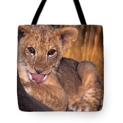 Shy African Lion Cub Wildlife Rescue Tote Bag