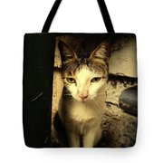 Shy Cat Tote Bag
