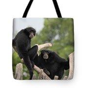 Siamang Monkeys Tote Bag