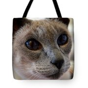 Siamese Cat Peers Into Unknown Tote Bag