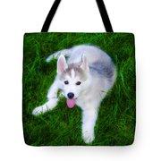 Siberian Huskie Tote Bag